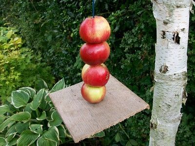 How to make an apple bird feeder from recycled material in for Making a bird feeder out of recycled materials