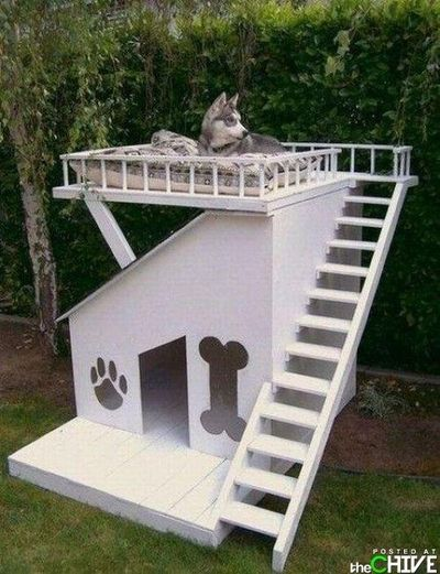 Dog house with rooftop deck funny stuff juxtapost - The rooftop deck house ...