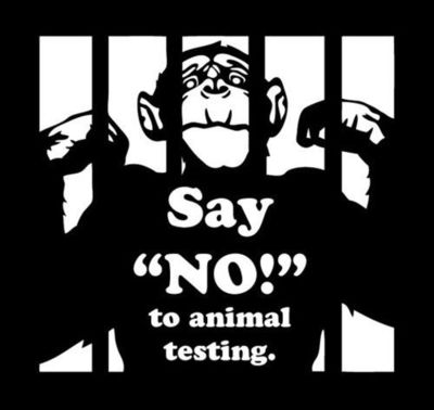 Animal testing against arguments essay outline