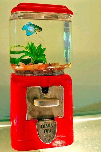 Diy gumball machine fish tank school planning juxtapost for Gumball fish tank