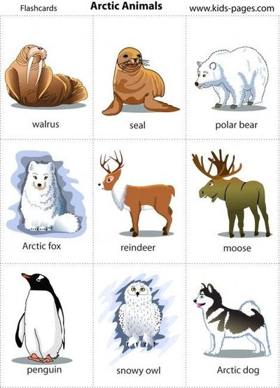 Arctic Animals Printable Poster Andor Game Cards
