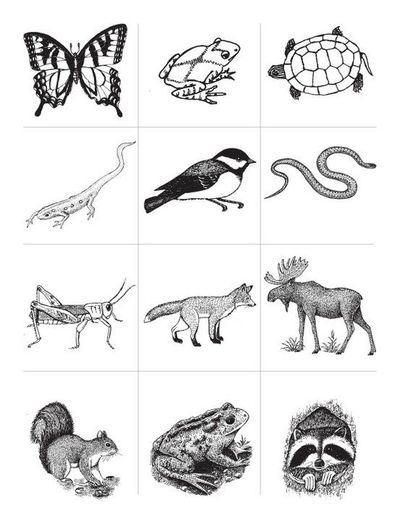 coloring pages animal classification lesson - photo#24