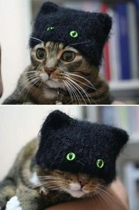 Kitty cap.