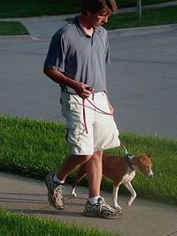 How to stop a dog from pulling on the leash.