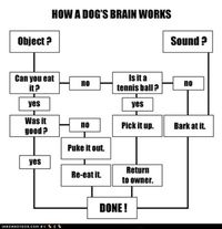 How a dogs brain works