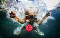 Photos by Seth Casteel, this might be what my dogs look like from under water when they play fetch.