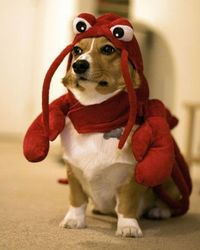 CODE NAME RED LOBSTER