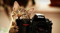 Cat photographe