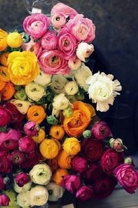 Ranunculus; so pretty and similar to roses!