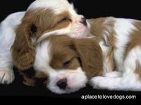 Cute Puppy Pictures video