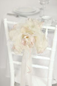 White Chair Rose
