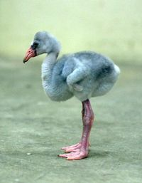 young stork wearing blue mink fun fur