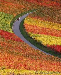 Autumn colors Vineyards near Heilbronn, Germany