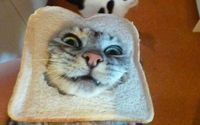 What is with these people putting their cats heads in bread?