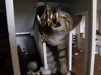 cat in the dollhouse