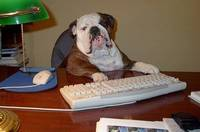 Funny English Bulldogs from funniespet.com