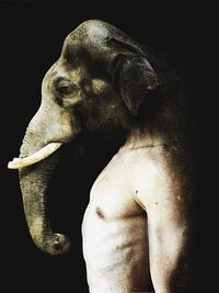 From the illustrative series 'Les Creatures Hybrides' by Francesco Sambo