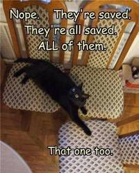 Theyre all saved - Imgur