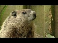 Groundhog Day video