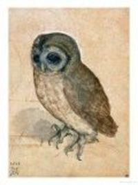 Albrect Durer - the perfect owl...