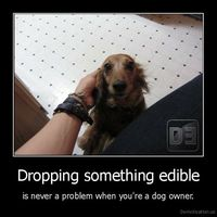 Dropping something edible is never a problem when you're a dog owner.