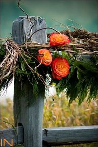Rose wrapped fence