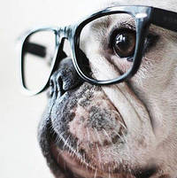 Hipster Pup