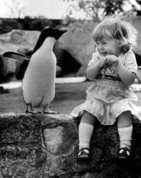 Love Penguins!!