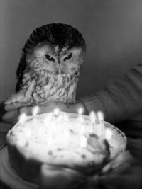 Birthday owl demands cake!