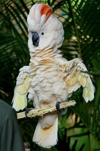 posts similar to salmoncrested cockatoo juxtapost