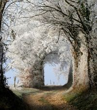 I want to walk down this path.